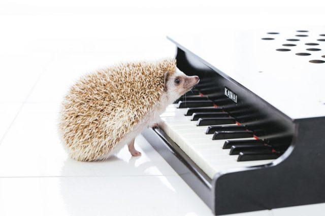 引越し時の電子ピアノ